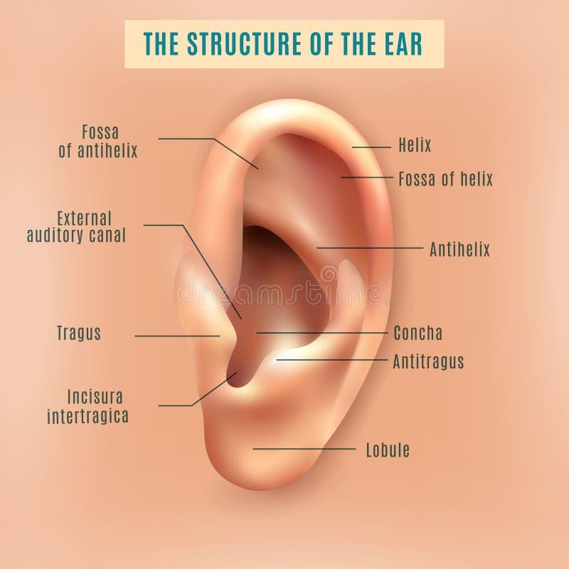 Cartel humano del fondo médico de la estructura del oído stock de ilustración