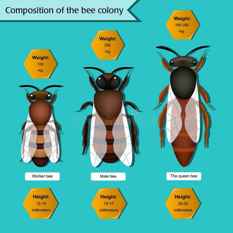 Cartel informativo en la composición de la colonia de la abeja stock de ilustración