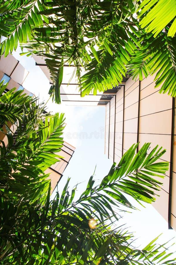 Cartel urbain d'architecture avec la vue verte de paume  images stock