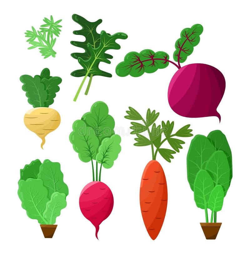 Cartel vegetal del vector del color de la colección de Vitaminic stock de ilustración