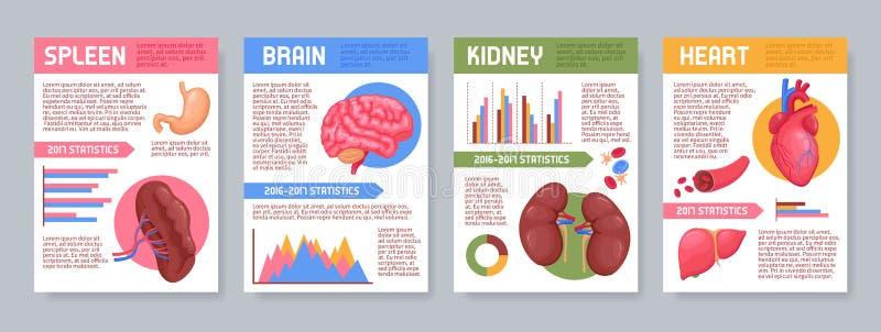 Carteles humanos de los órganos internos fijados libre illustration