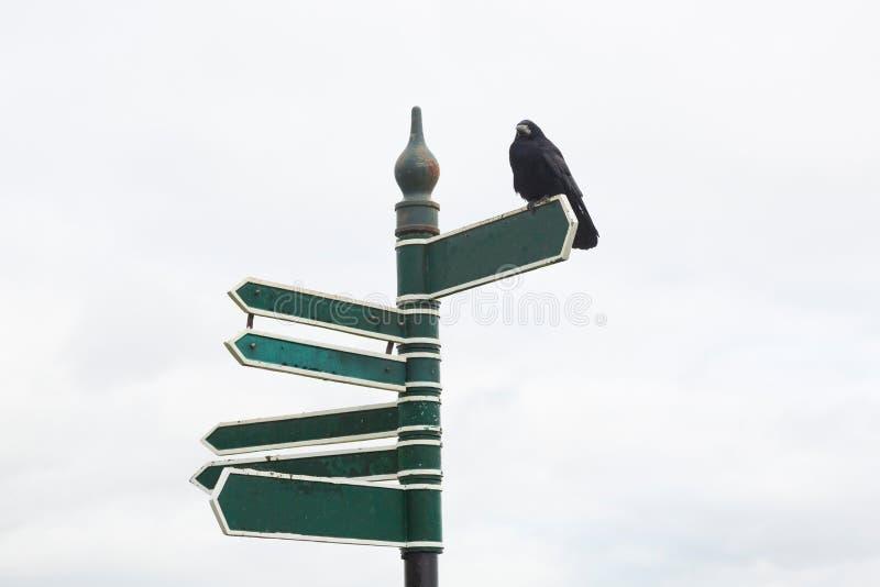 Cartelli vuoti con Raven che si siede sulla cima immagine stock libera da diritti