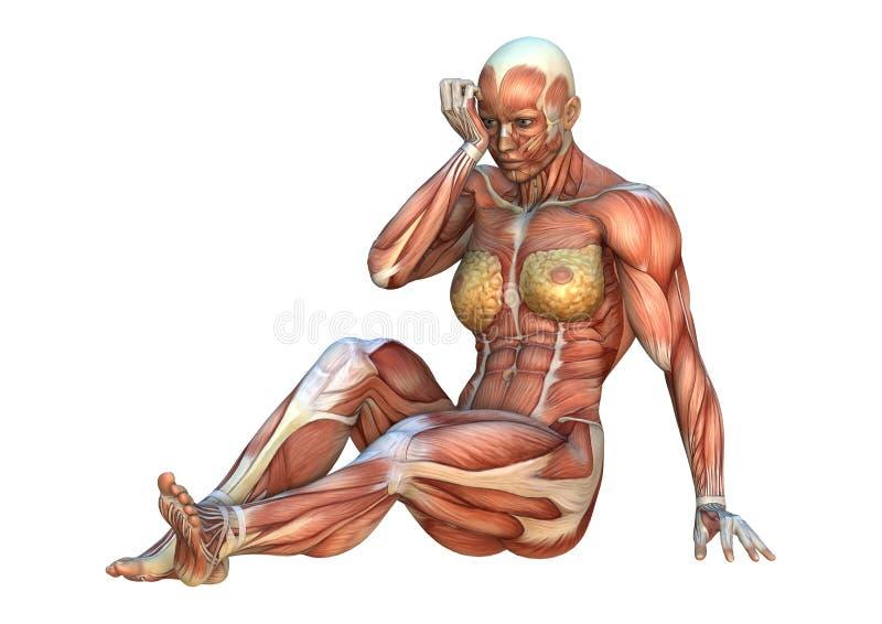cartes de muscle du rendu 3D illustration de vecteur
