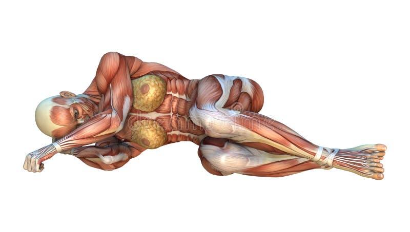 cartes de muscle du rendu 3D illustration libre de droits