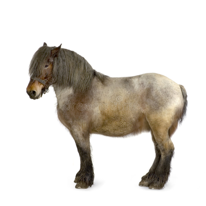 Carthorse image stock