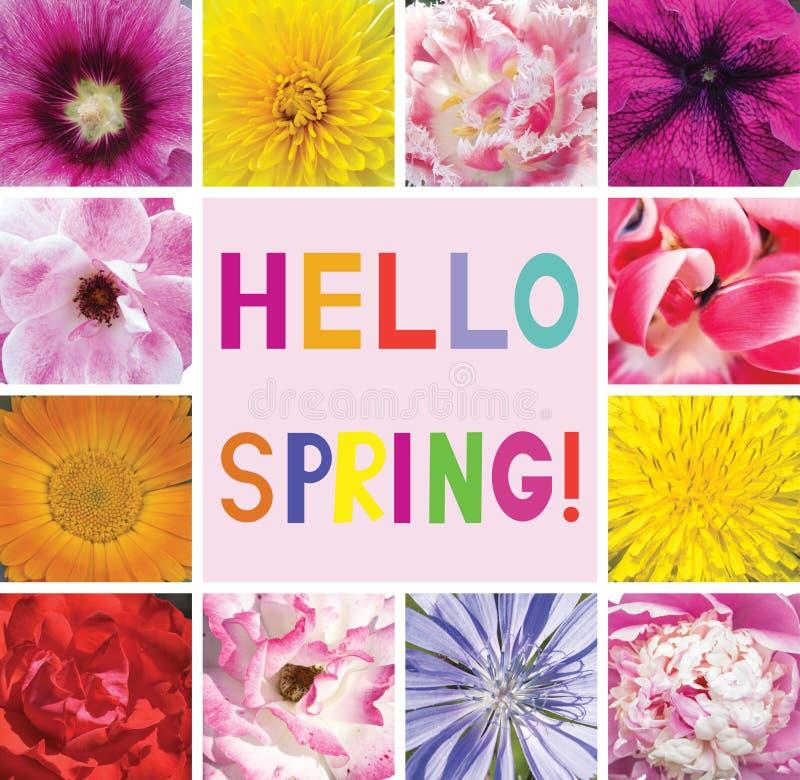 Cartolina con i fiori ed i saluti della primavera di parole Ciao primavera illustrazione di stock