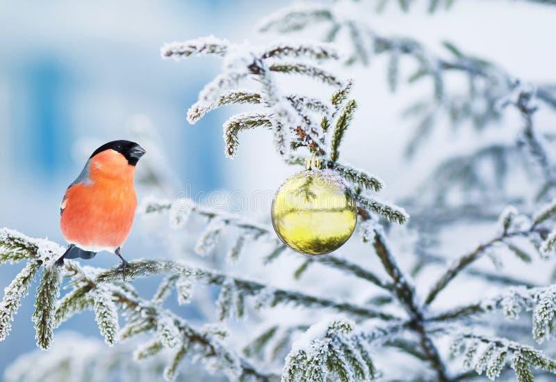 cartolina con un ciuffolotto luminoso dell'uccello che si siede su un reggiseno immagine stock libera da diritti