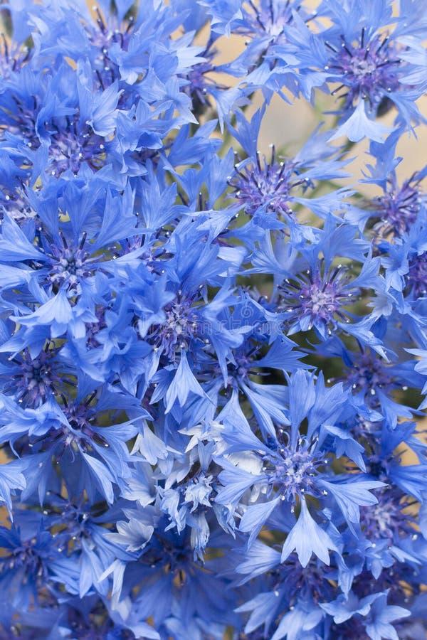 Cartolina d'annata con il fiore blu immagine stock