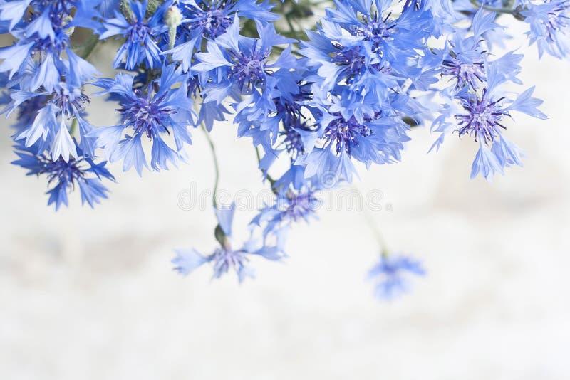 Cartolina d'annata con il fiore blu fotografia stock libera da diritti