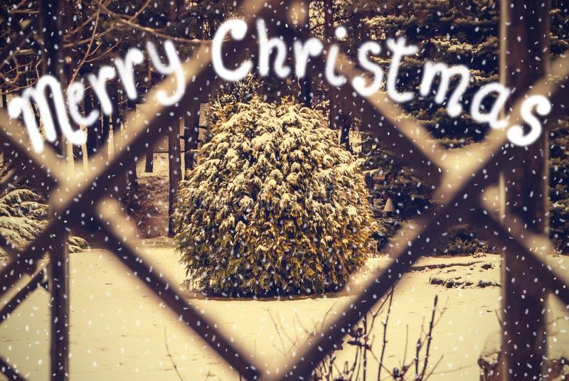 Cartolina d'auguri d'annata di Buon Natale degli alberi di inverno guardati attraverso la finestra fotografia stock