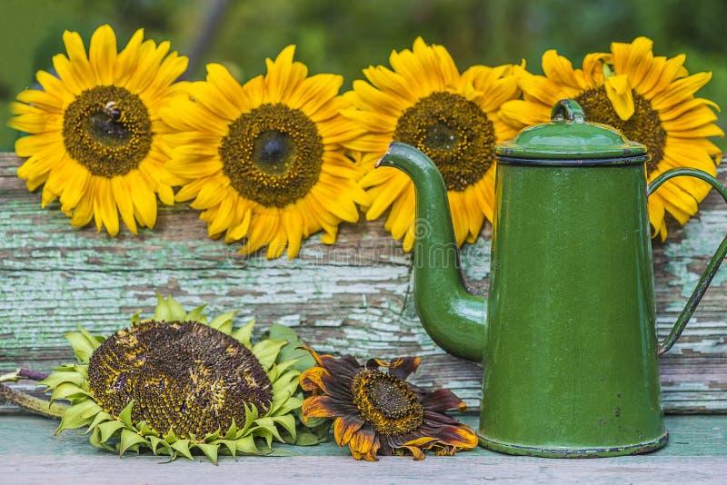 Cartolina d'auguri con i girasoli luminosi e la caffettiera d'annata fotografia stock libera da diritti
