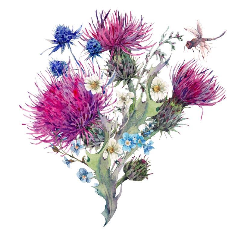 Cartolina d'auguri dell'acquerello di estate con i fiori selvaggi, cardi selvatici, Dan illustrazione vettoriale