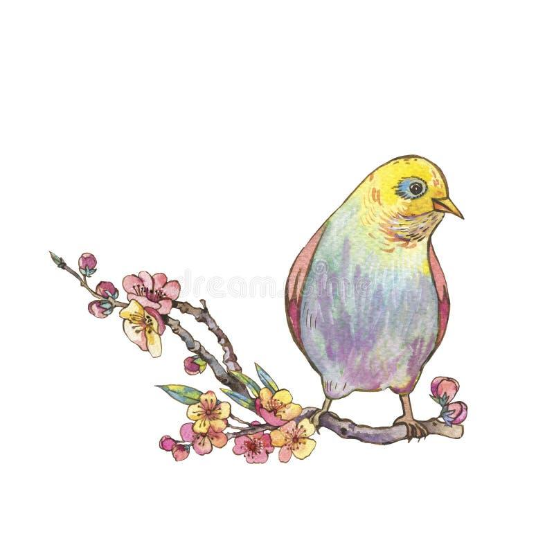 Cartolina d'auguri floreale della molla dell'acquerello, rami di fioritura rosa o royalty illustrazione gratis