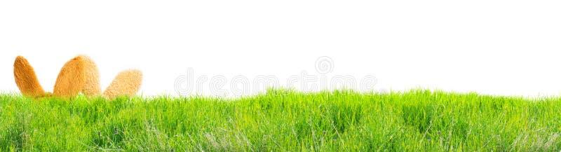 Cartolina d'auguri Pasqua felice, coniglietti di pasqua in erba fotografia stock