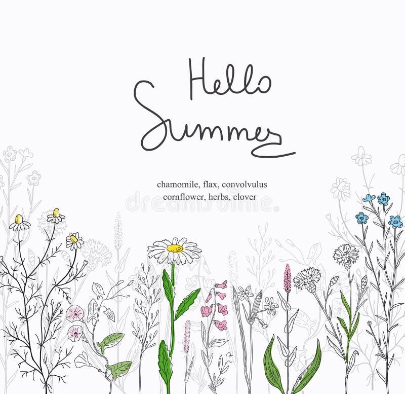 Cartolina dell'erbe e fiori selvaggi illustrazione vettoriale