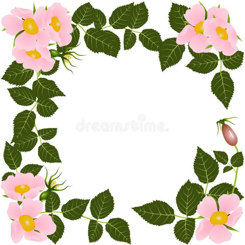 Cartolina rosa selvaggia di fioritura illustrazione di stock