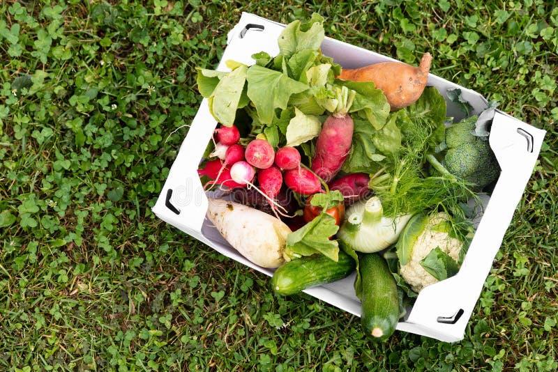 Carton box full of fresh organic vegetables lying in a flower me royalty free stock photos
