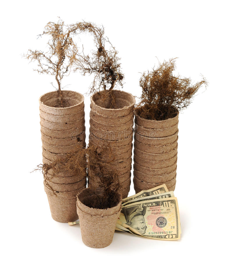 Download Carton Vase, Root And Money Stock Image - Image: 34956475
