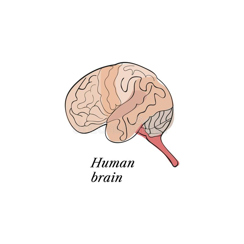 download human brain sketch stock illustration illustration of idea 110745972