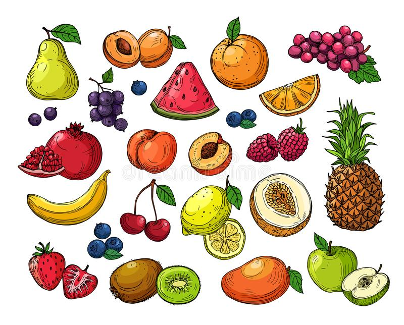 Cartoon berries and fruits. Pineapple grapes, pear apple, orange mango, melon kiwi, banana lemon. Vector isolated set royalty free illustration