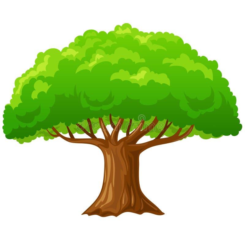 Cartoon big green tree isolated on white. royalty free illustration