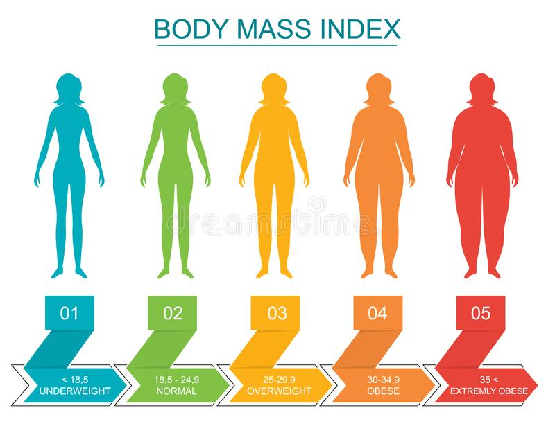 Cartoon Body Mass Index Infographics Concept Card Poster. Vector. Cartoon Body Mass Index Infographics Concept Card Poster Include of Overweight, Obese royalty free illustration