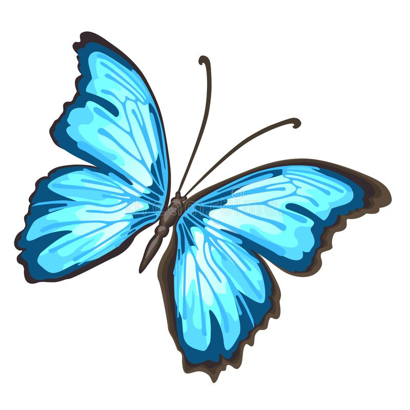 Cartoon butterfly with blue wings isolated on white background. Cartoon vector close-up illustration. Cartoon butterfly with blue wings isolated on white stock illustration