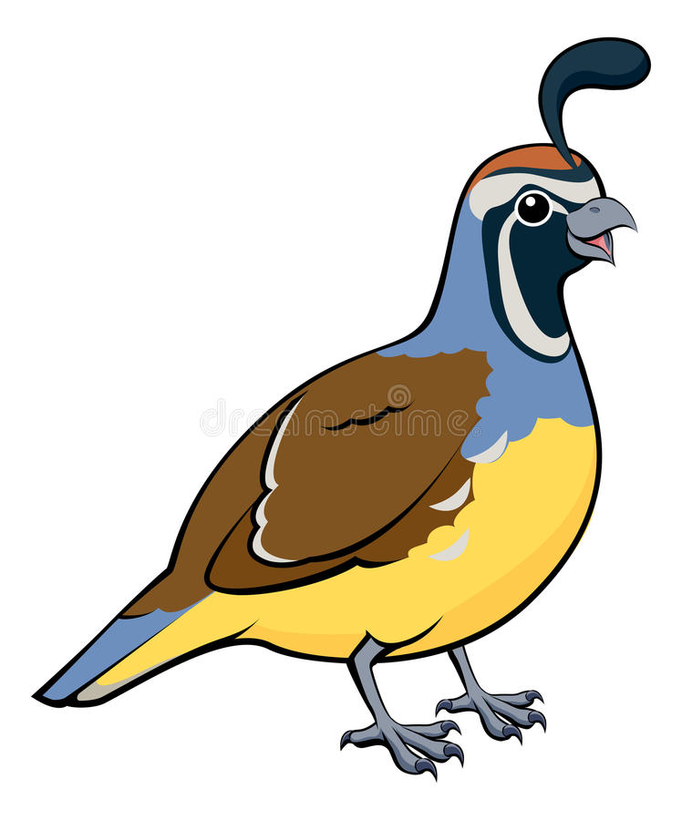 Free Cartoon California Quail Stock Photo - 32434120