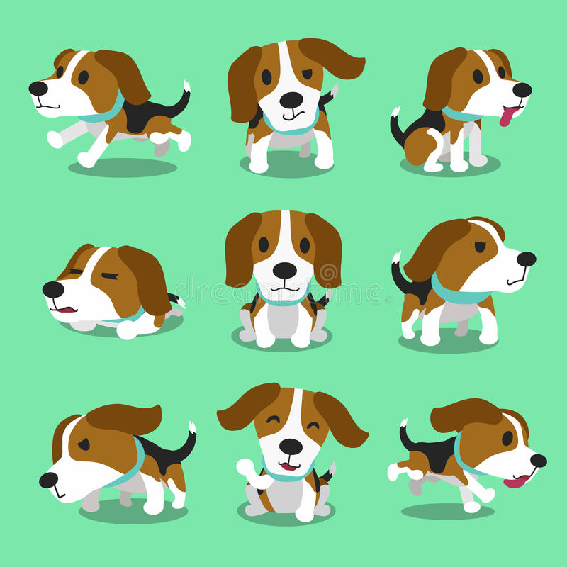 Cartoon character beagle dog poses. For design royalty free illustration