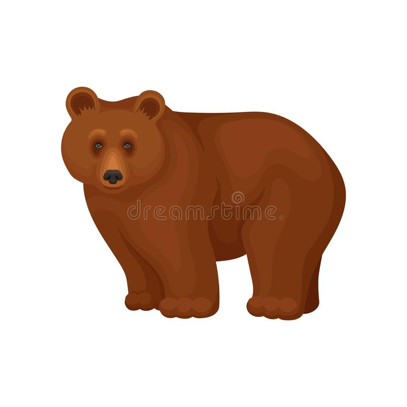 Cartoon character of large brown bear standing on four paws. Forest animal. Flat vector for promo flyer or poster of zoo. Cartoon character of large brown bear royalty free illustration