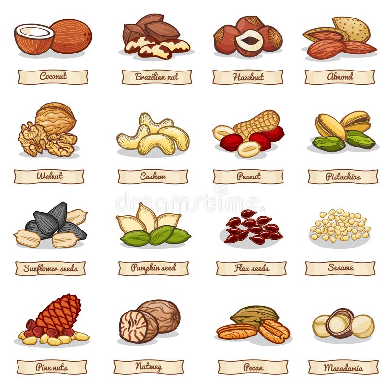 Cartoon color nut and seed grains. Vector collection. Nuts ingredient, vegetarian organic hazelnut and almond illustration stock illustration