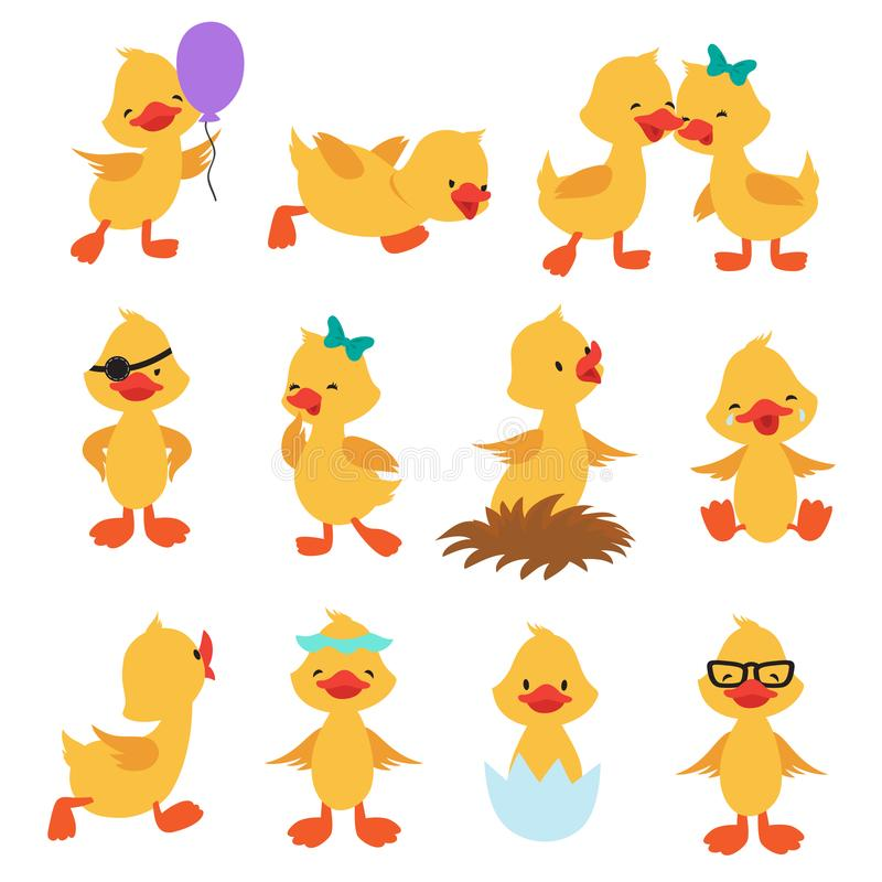 Cartoon cute ducks. Little baby yellow chick vector isolated characters stock illustration