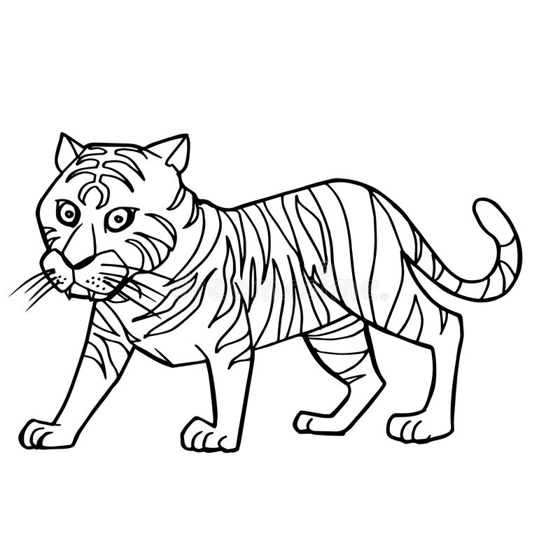 Cartoon cute tiger coloring page vector royalty free illustration