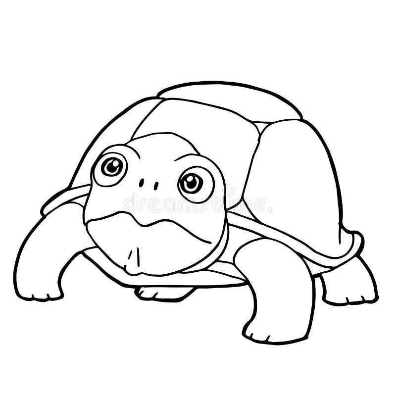 Download Cartoon Cute Turtle Coloring Page Vector Stock Vector    Illustration Of Clip, Cute: