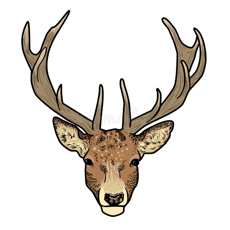 Cartoon deer head with antlers. On white background vector illustration