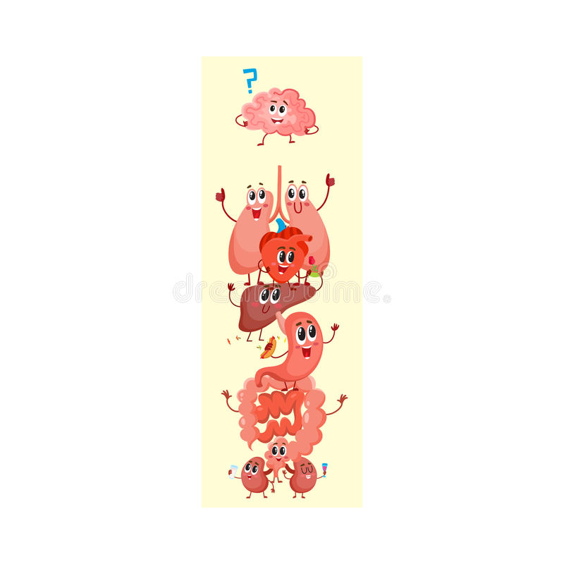 Cartoon diagram of human anatomy, funny internal organ characters. Cartoon diagram of human anatomy, funny organ characters - heart, lungs, kidneys, intestines stock illustration