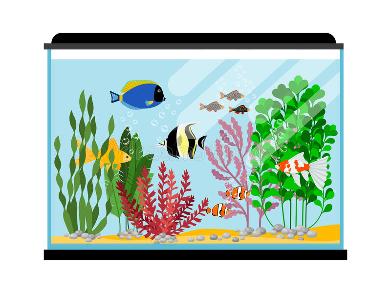 Cartoon fishes in aquarium. Saltwater or freshwater fish tank vector illustration vector illustration