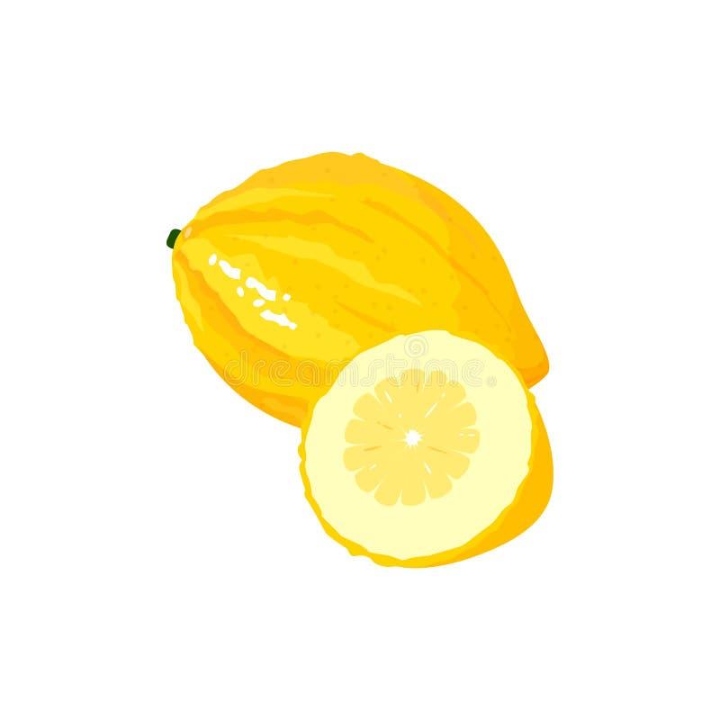 Cartoon fresh citron isolated on white background. Citron isolated on white background. Bright vector illustration of colorful half and whole of juicy citron royalty free illustration