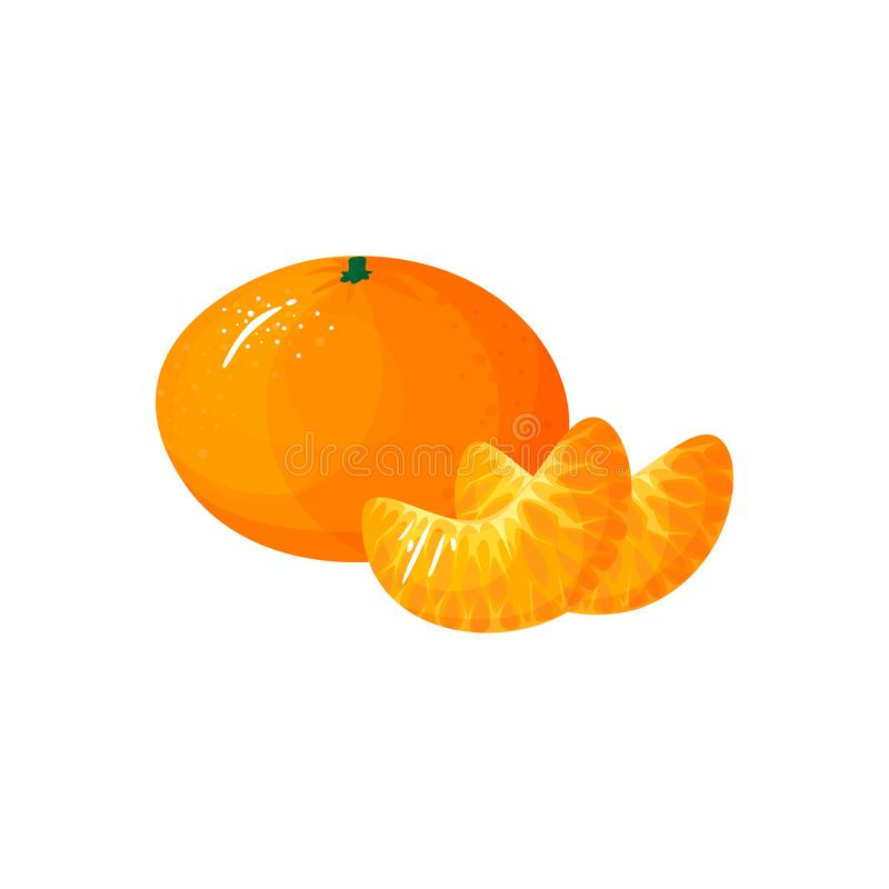 Cartoon fresh tangerine or mandarin orange fruit. Tangerine isolated on white background. Bright vector illustration of colorful half and whole of juicy mandarin stock illustration