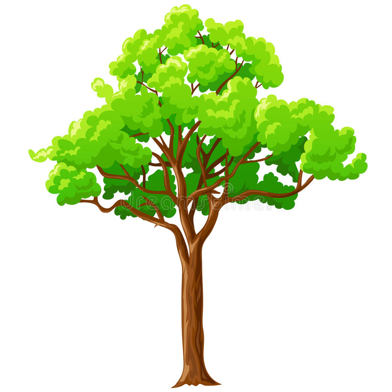 Cartoon green tree isolated on white. royalty free illustration
