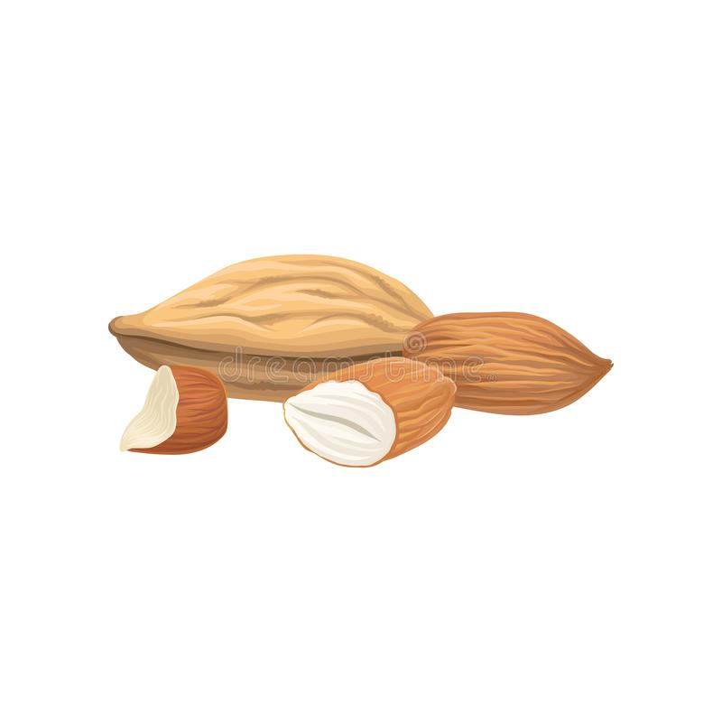 Cartoon hand drawn icon of almond nuts. Healthy food concept. Natural and tasty product. Culinary ingredient. Organic. Vegetarian nutrition. Detailed vector stock illustration