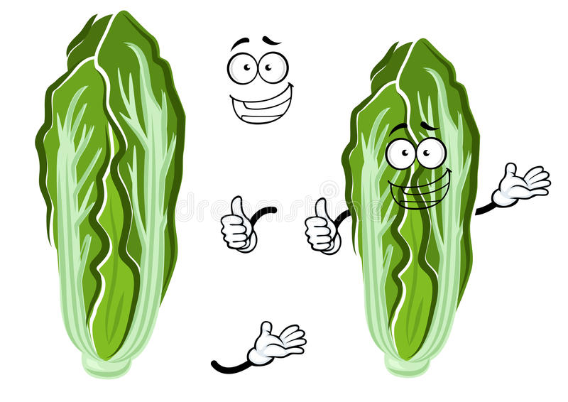 Cartoon happy chinese cabbage vegetable. Green and white head of chinese cabbage vegetable with fresh crunchy leaves. Smiling cabbage character for vegetarian stock illustration