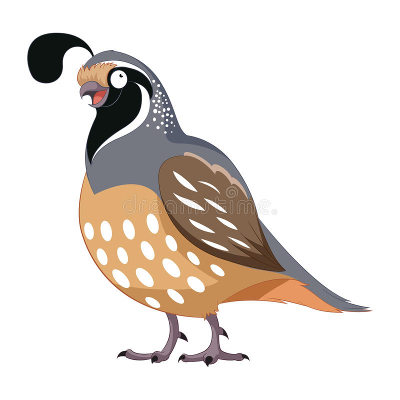 Cartoon happy Quail. Vector image of the Cartoon happy Quail royalty free illustration