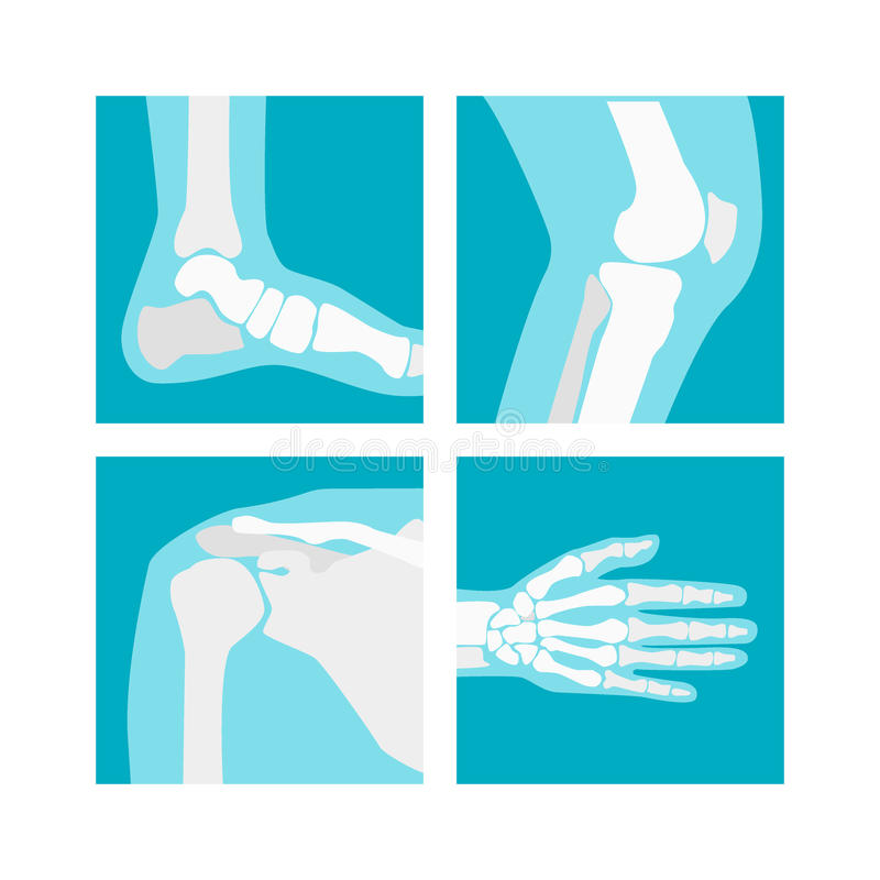 Cartoon Human Joints Set. Vector stock illustration