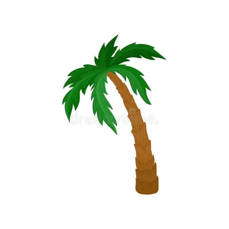 Big palm tree with green leaves and brown trunk. Natural landscape element. Flat vector for postcard or poster. Cartoon illustration of big palm tree with large royalty free illustration