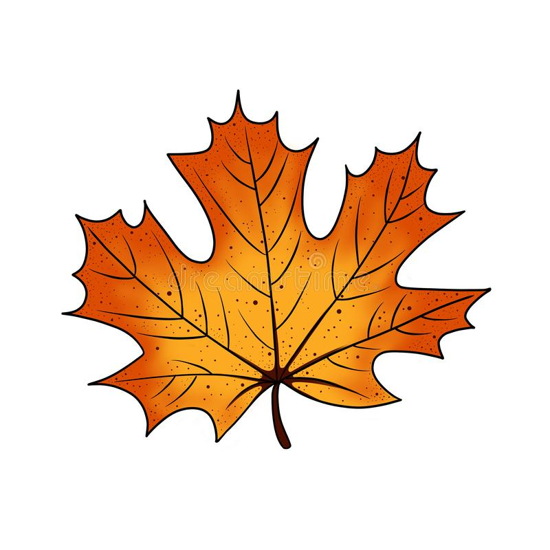Cartoon illustration of colorful autumn maple tree leaf. Object for design isolated on white background. vector illustration