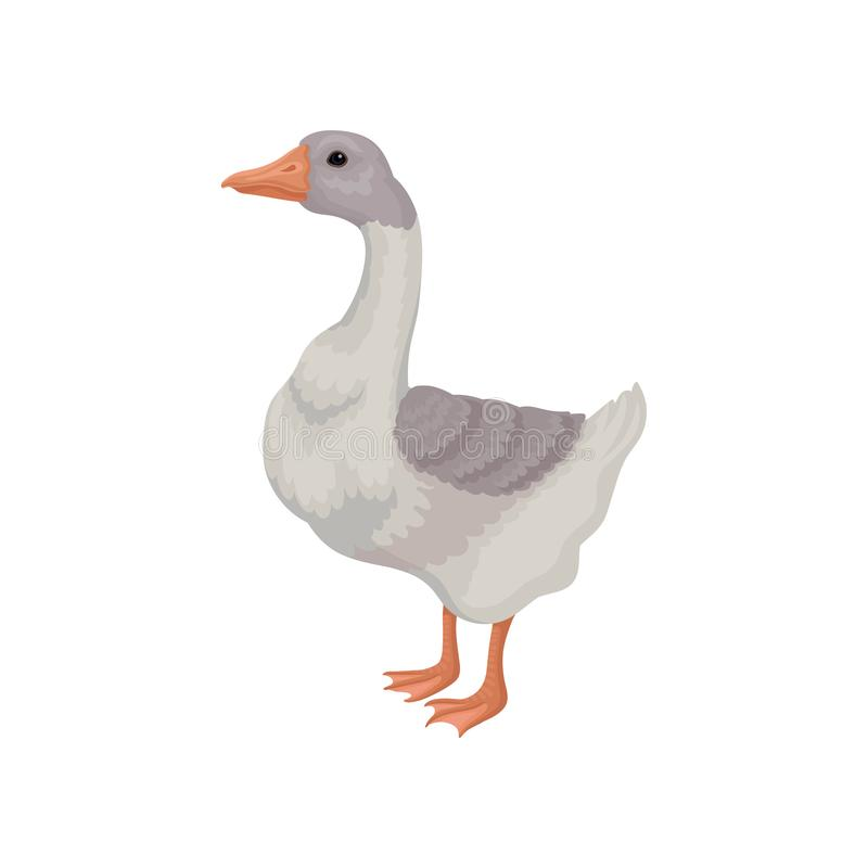 Free Cartoon Illustration Goose. Large Bird With White-gray Feathers And Long Neck. Domestic Animal. Flat Vector Icon Royalty Free Stock Images - 134176229