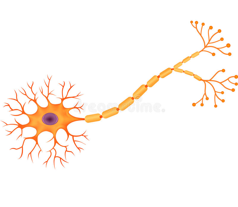 Cartoon illustration of Human Neuron Anatomy royalty free illustration