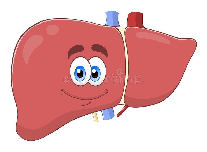 Cartoon liver. Cartoon cute liver isolated on white background vector illustration