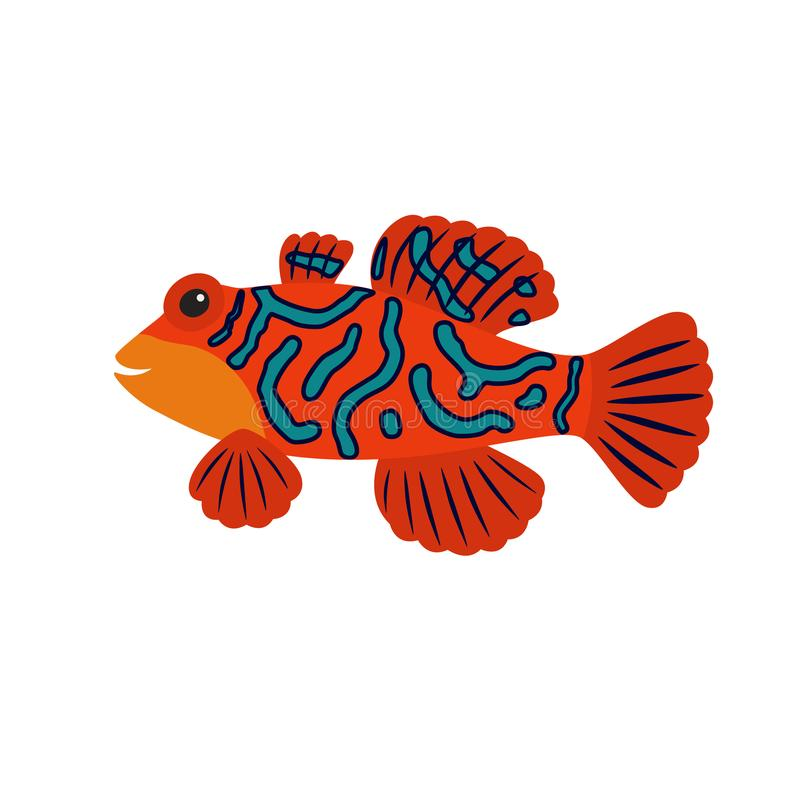 Cartoon mandarin fish. Vivid aquarium exotic fish in a tropical marine fish. vector vector illustration